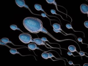 Sperm swimming